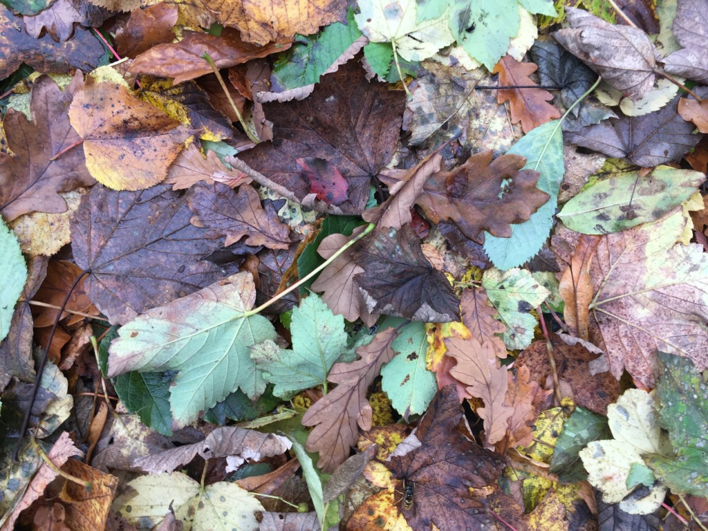 Autumn Leaves at Mansefied House